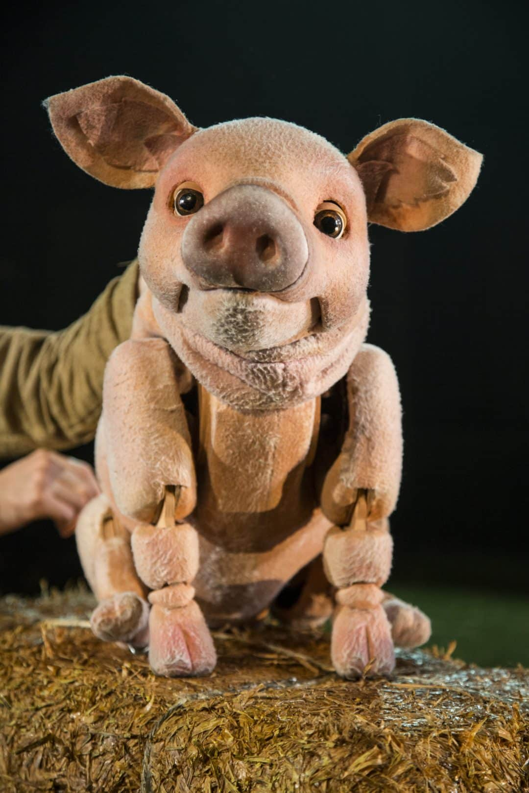 Babe The Sheep Pig live on stage