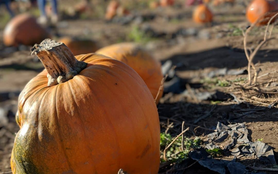 Zero-Waste Pumpkins & Healthy Pumpkin Recipes: How to Cook, Bake and Create