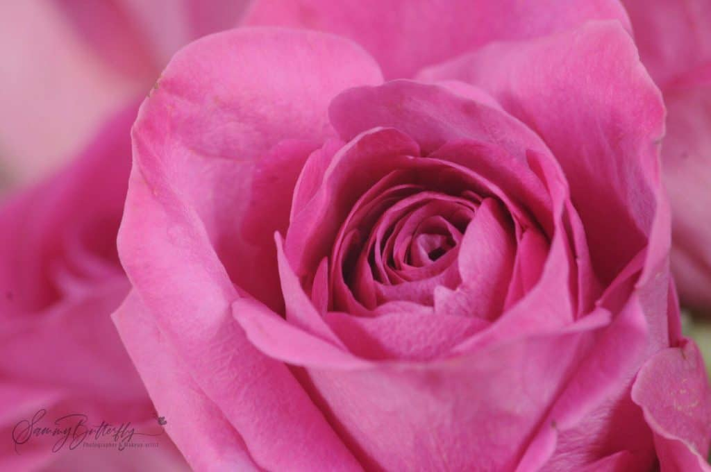 rose bud self care